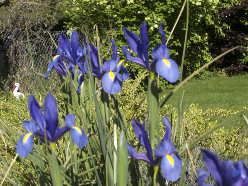 jardin fleuri autour du chateau de Kintzheim