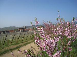 st hyppoyte village alsacien