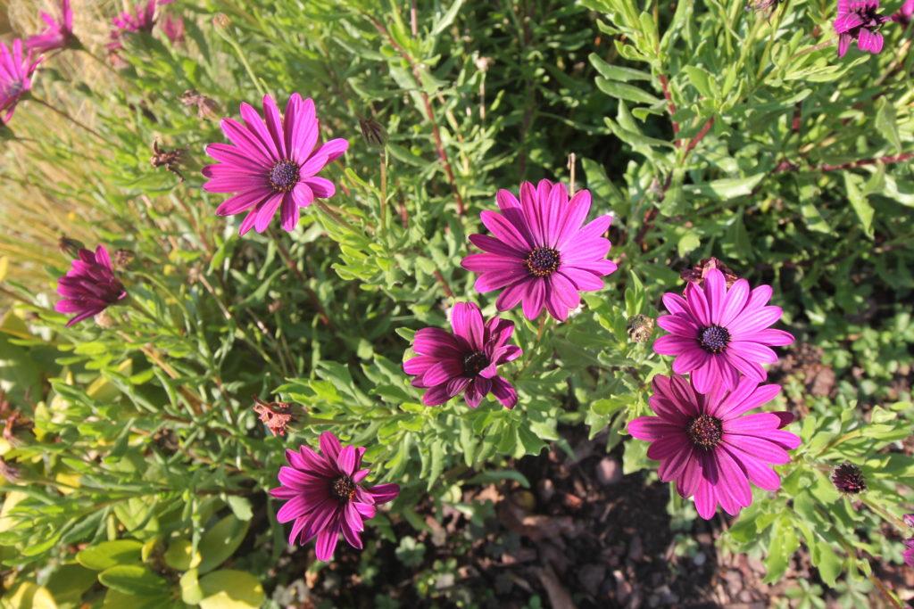 Fleurs jardin d'alsace gite riesling